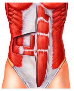 Gibt es obere und untere Bauchmuskeln?